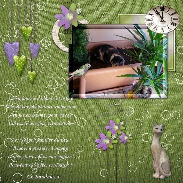 page libre