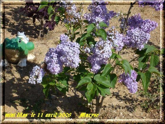 Mon jardin au printemps - Au jardin de mon pere les lilas sont fleuris ...